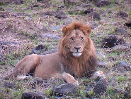 Kenya - Tanzánia